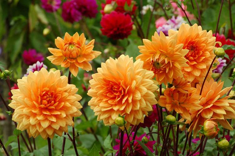 Çiçek Market